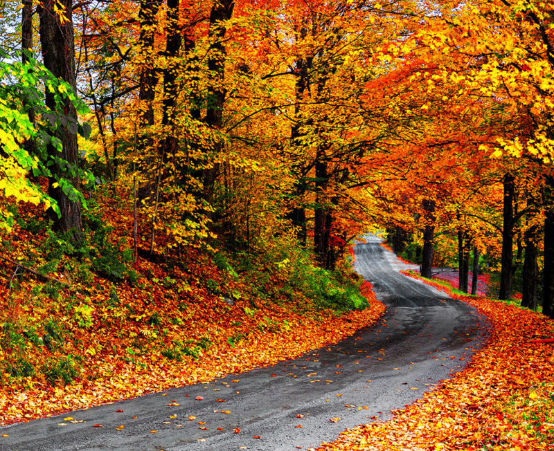 road through fall forest