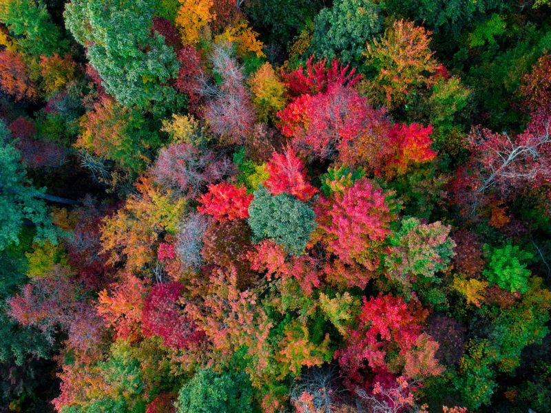 colorful fall trees view from above